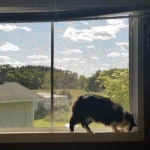 cat proof flyscreen