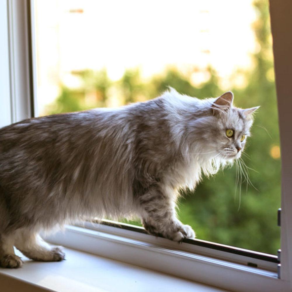 cat proof window screen
